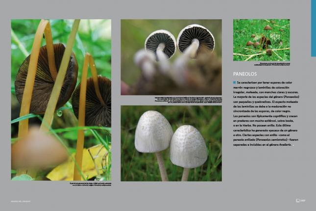 La medicina no tradicional en el tratamiento del hongo de las uñas